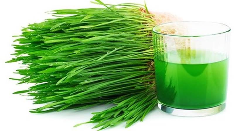 Plantele medicinale care te ajuta sa  renunti la fumat si care asigura dezintoxicarea organismului, in special a bronhiilor si a plamanilor